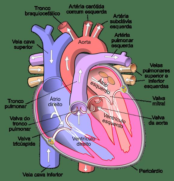 Heart Attack Healing Gunar Gerthe